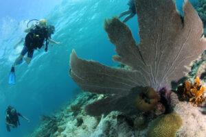 Duiken tijdens een vakantie op Curacao